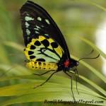 _EMG2486-birdwing